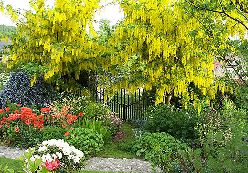 Yellow flowers over Gate